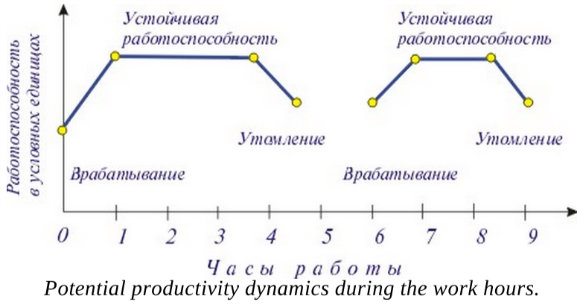 Potential Productivity Dynamics During the Work Hours