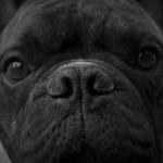 Pavlov's Dogs and Kettlebells